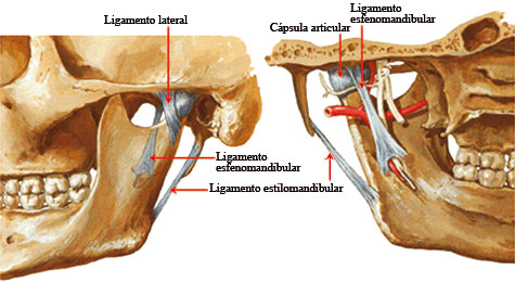 temporomandibular_interior